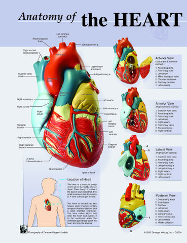 Human Heart Anatomy Charts-Notebook Size Poster;Pk/10