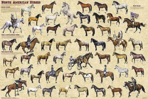 Laminated  North American Horses Poster 24x36 Equine History