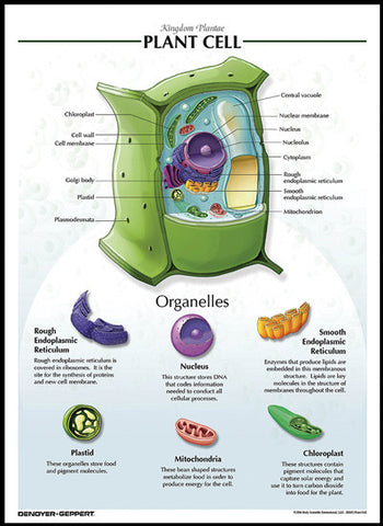 Laminated Biological Chart PLANT CELL Poster
