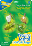 Insect Lore Praying Mantis Life Cycle Stages - Set of 4 Figures