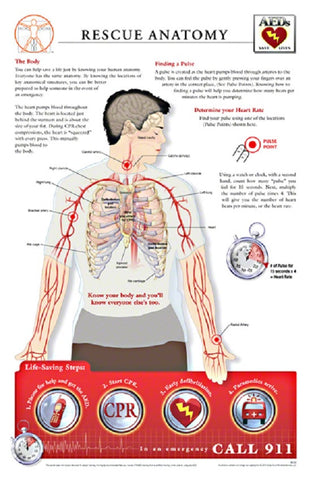 11x17 Post-It Rescue Anatomy Poster - The Arteries & Pulse Determination