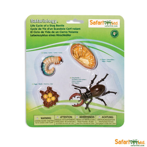 Life Cycle of a Stag Beetle - 4 Piece Safariology Set
