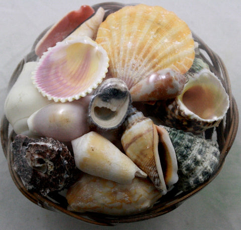 Seashells in Wicker Basket - Small