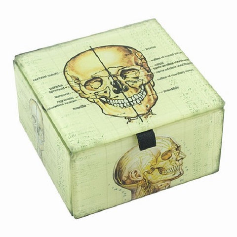 Glass Box with Skull Illustrations
