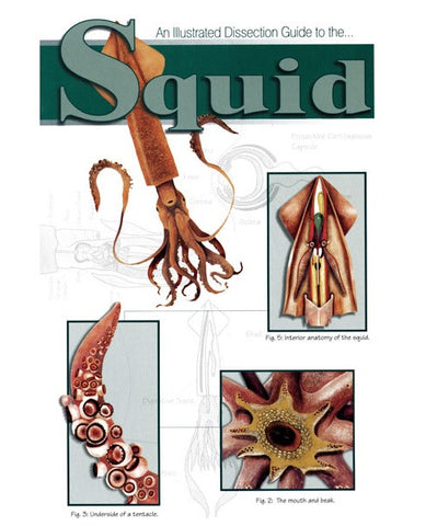 Illustrated Dissection Guide Book To Squid by Peter Reinthal