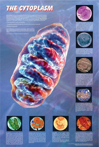 The Cytoplasm and its Components - Biology Poster, 36x26""