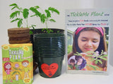 Tickle Me Plant Large Complete Classroom Kit - Includes 30 Mimosa Growing Kits & Book