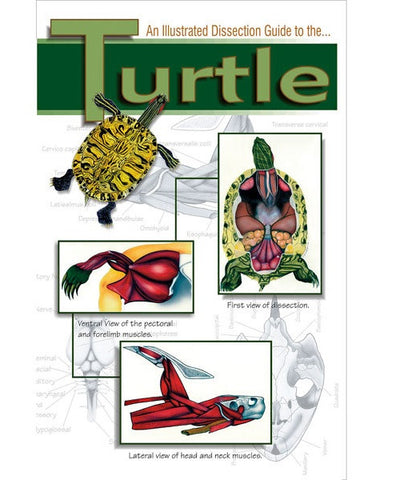 Illustrated Dissection Guide Book to the Turtle David Hall