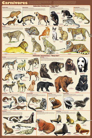 Laminated Carnivorous Animals Poster 24x36