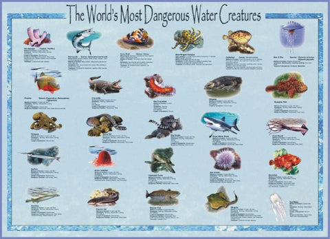 World's Most Dangerous Water Creatures Laminated Poster 38x26""