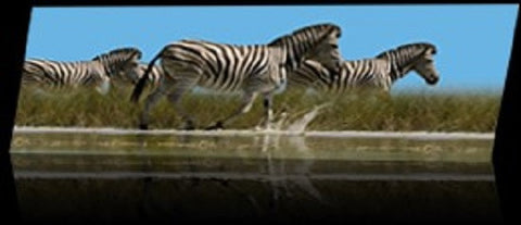 Animated Zebras Bookmark By Emotion Gallery
