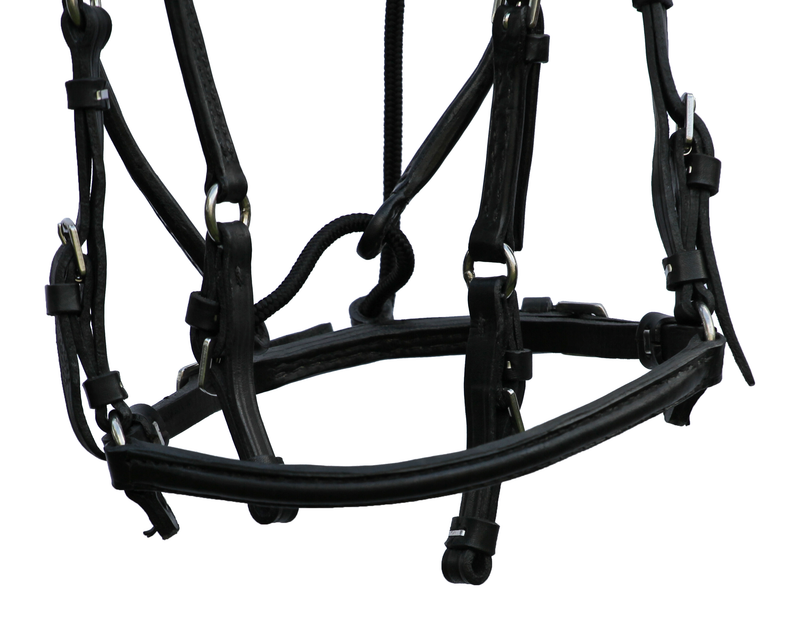 Black Show Bridle
