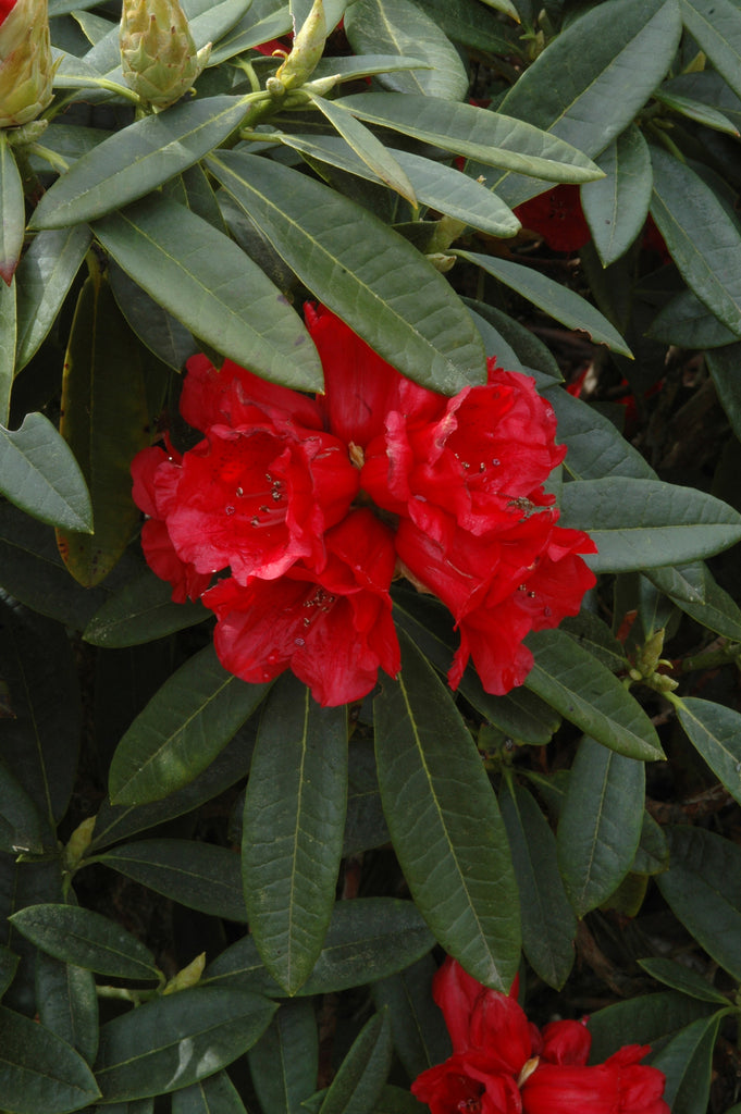 Double Flower Form