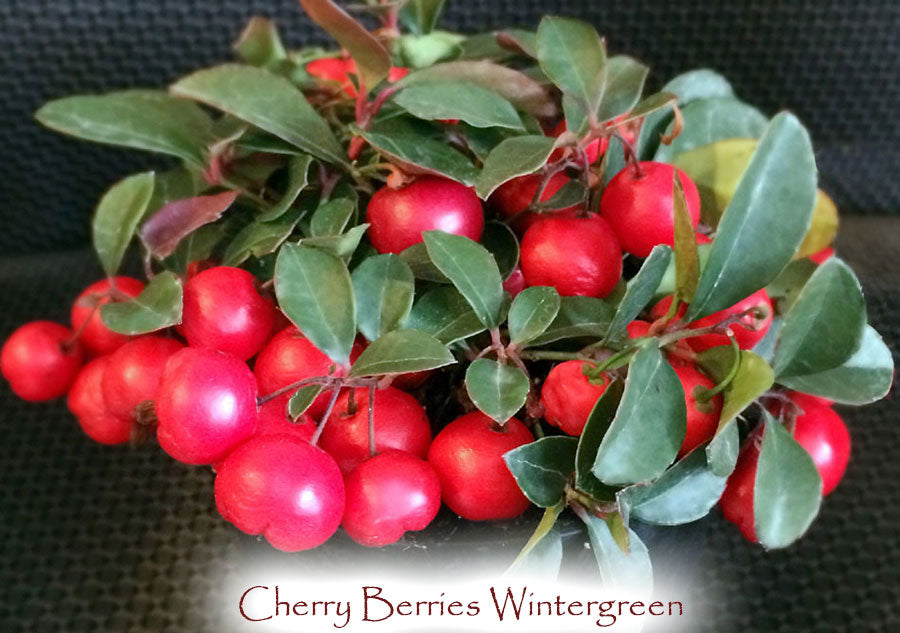 Cherry Berries Wintergreen