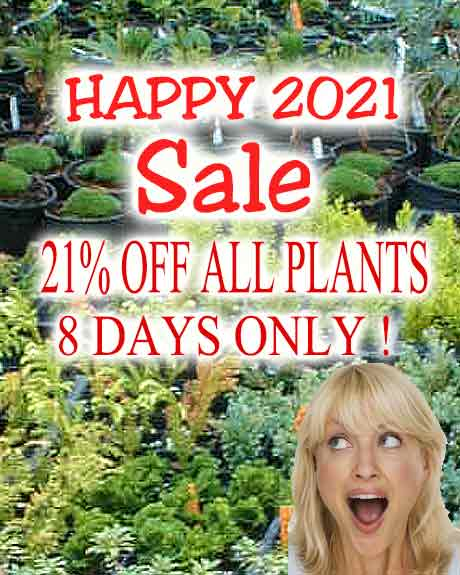 21% OFF ALL PLANTS NEW YEARS SALE