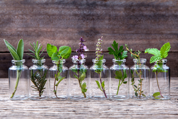 5 Must-Have Essential Oils which Aromatherapy expert chose when Traveling