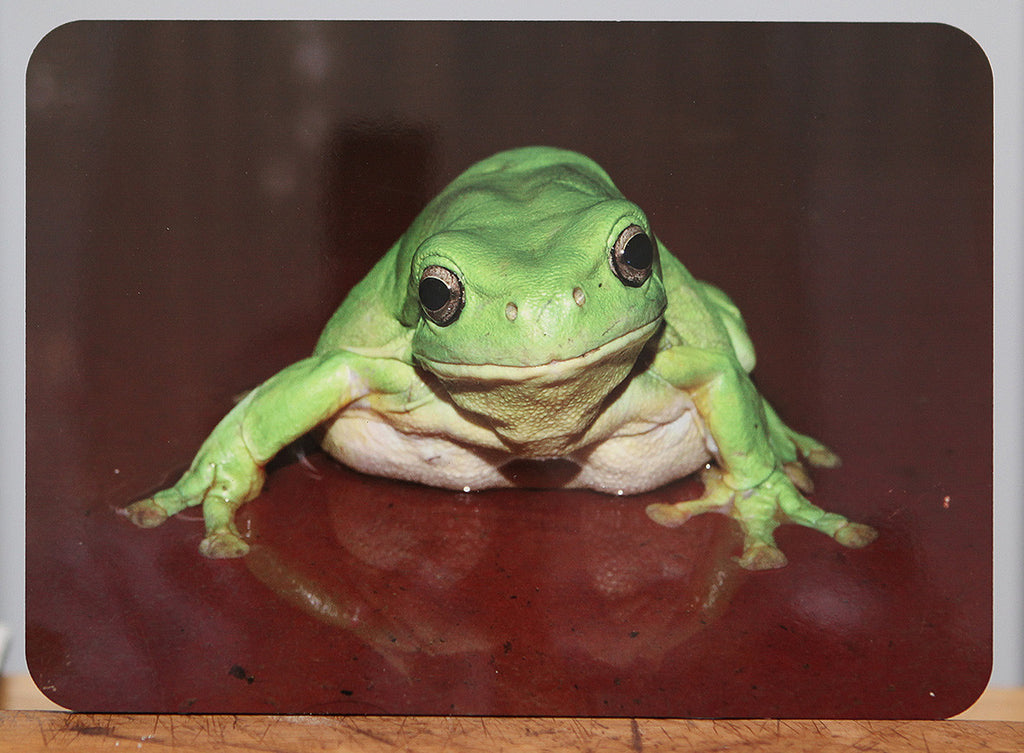 Green Tree Frog place mat