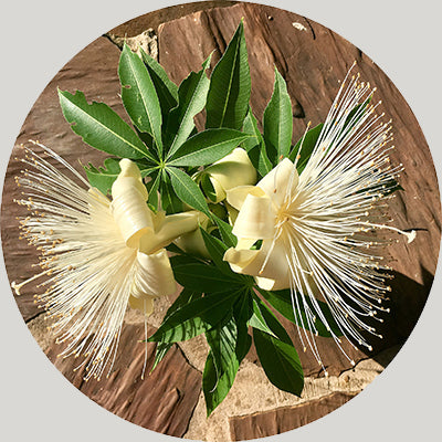 Kimberley Boab tree flower. Ornamental Plates
