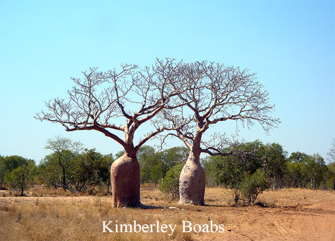 Copy of Free Standing large Photo Board. Kimberley Boabs Scene