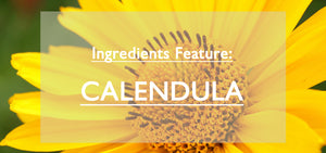 Ingredient Feature Calendula Image