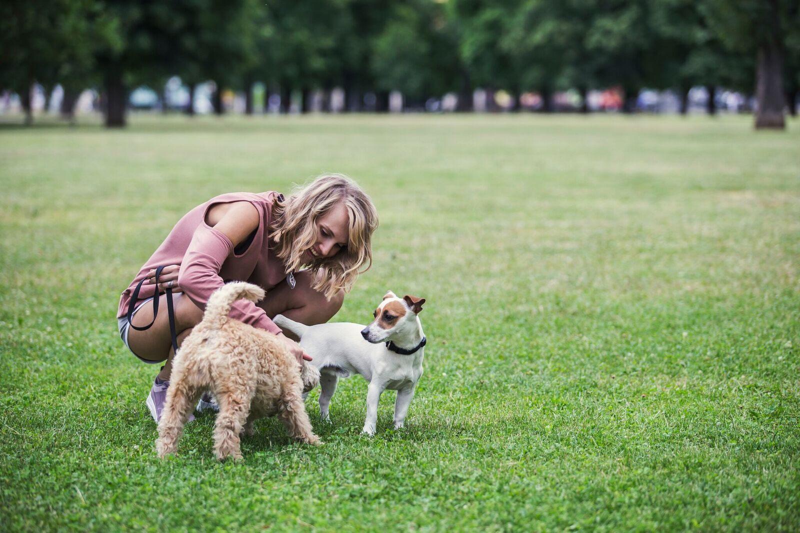 Picture of woman playing with two dogs