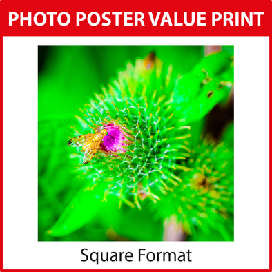 Photo Poster Value Print - Square Format