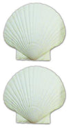 "SCALLOP BAKING SHELLS 4"" 4PCS"