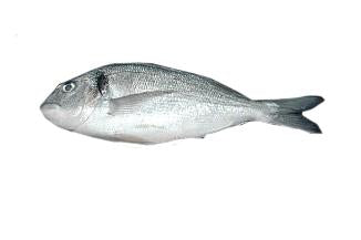 BREAM SEA 450-600g WHL*S/G* by LB