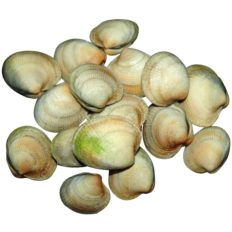 CLAMS PASTANECK 5 LB BAG