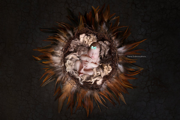Nest Feather With Dark Background And Texture - Digital Newborn Photography Prop