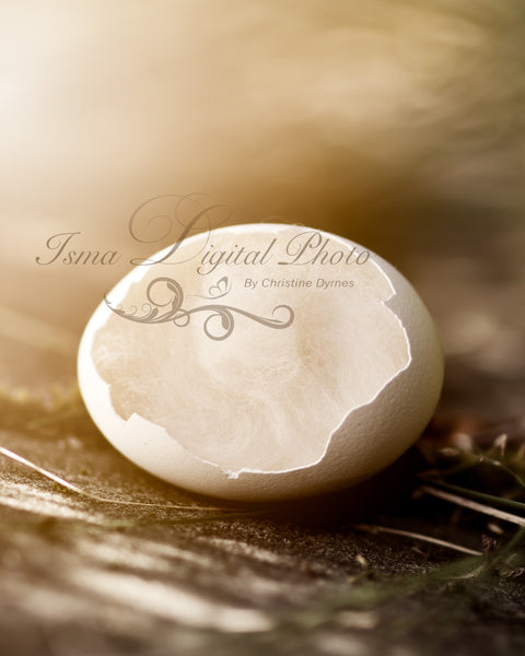 Egg 4 - Beautiful Digital background Newborn Photography Prop download