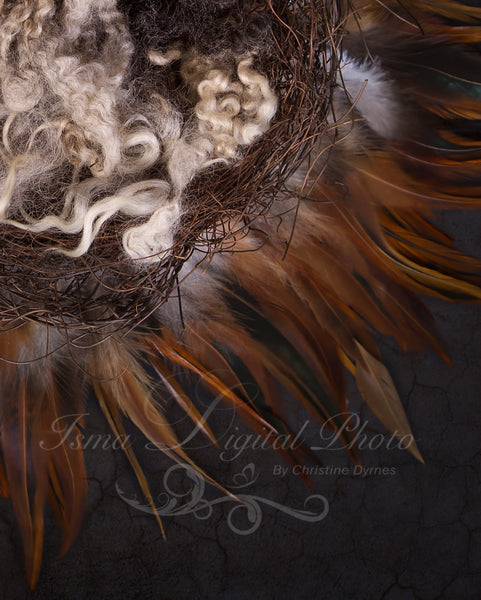 Nest feather  - Digital backdrop - psd with layers
