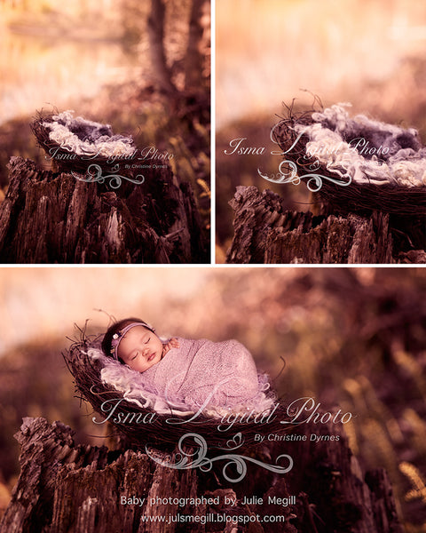 Nest Nature Autumn - Beautiful Digital background Newborn Photography