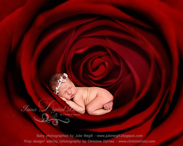 Rose Baby - Beautiful Digital background Newborn Photography Prop download