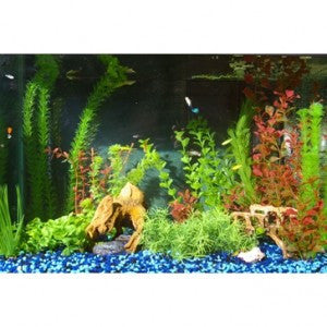 Protect your Aquarium Fish with UV Sanitation!