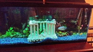 Clean Aquarium UV Sterilization
