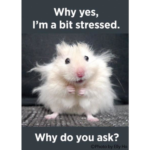 Why Yes, I'm a Bit Stressed - Magnet