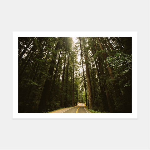 AVENUE OF THE GIANTS II