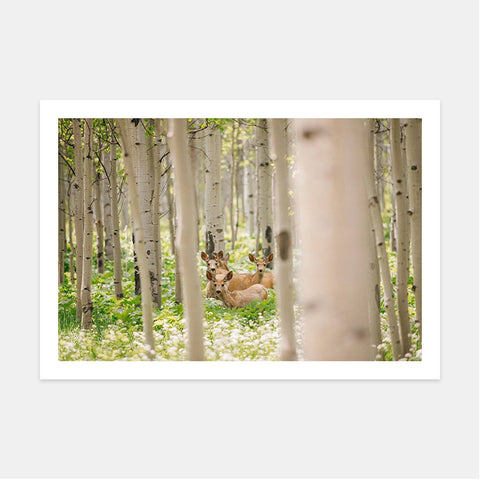 DEER AMONG ASPEN TREES