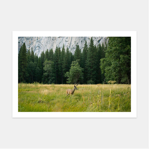 DEER IN YOSMITE VALLEY