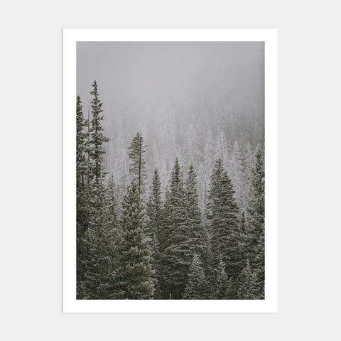 FALLING SNOW IN ROCKY MOUNTAIN NAT'L PARK