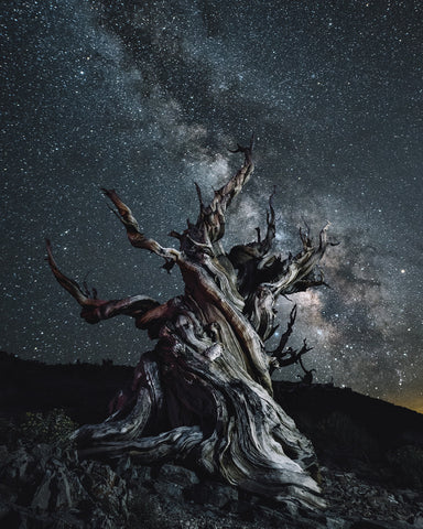 METHUSELAH TREE AND THE MILKY WAY