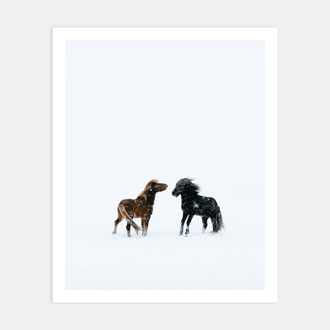 ICELANDIC HORSES IN SNOW