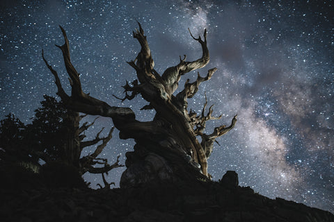 METHUSELAH TREE AND THE MILKY WAY II