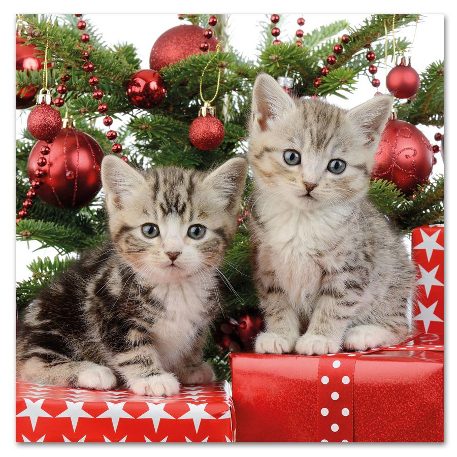 Chritmas Day Kittens Paper Luncheon Napkins