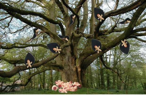actually babies do grow on trees