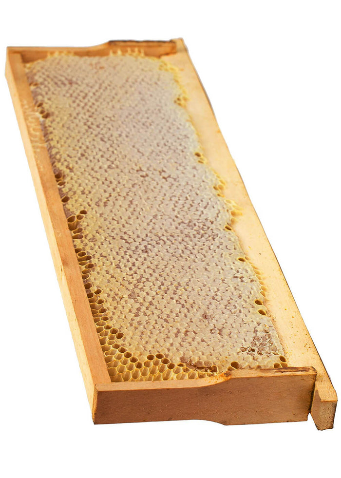 Wooden Frame of Honeycomb from the Hive