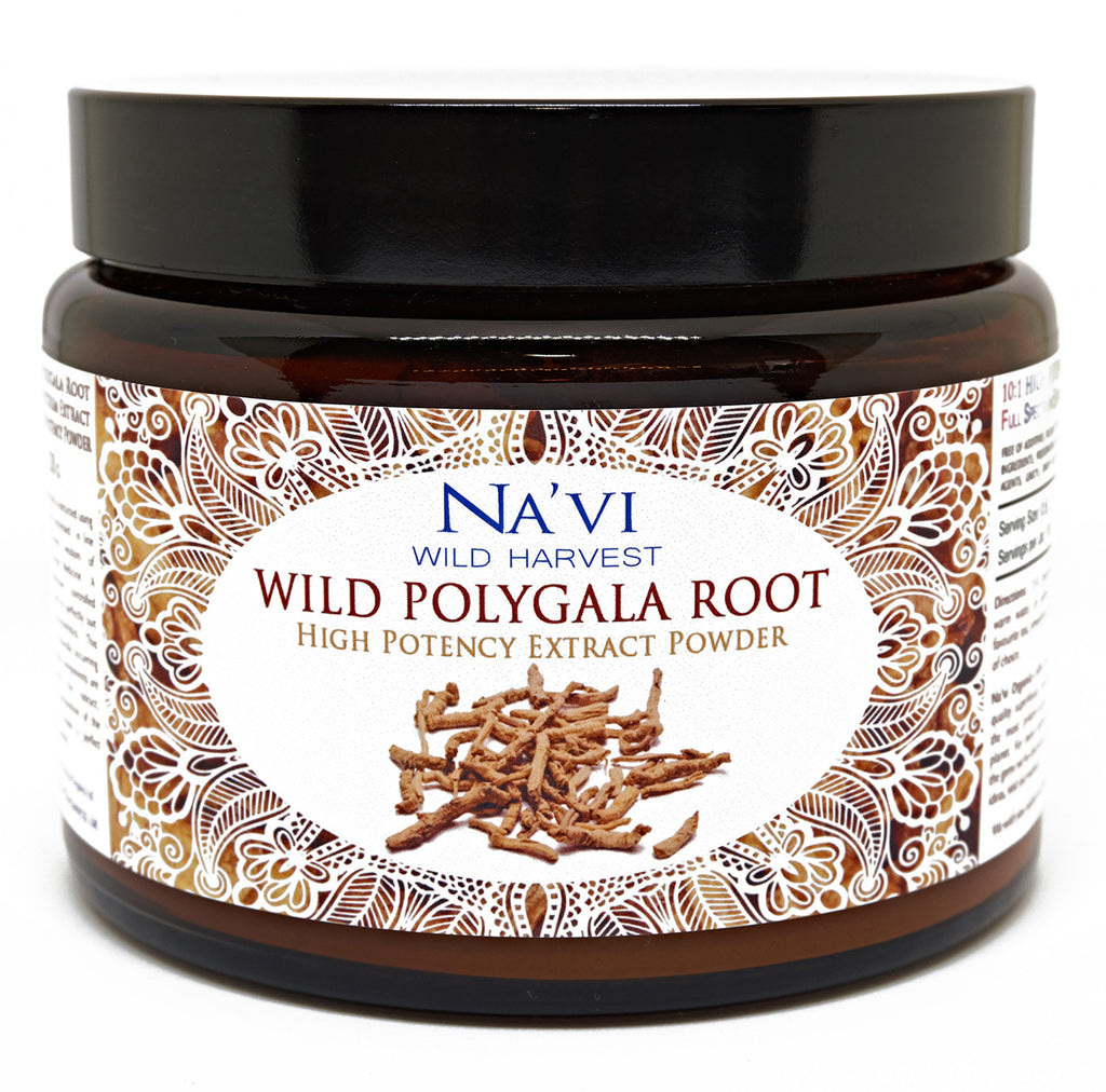 250 gram jar of wild harvested Polygala Root Extract Powder