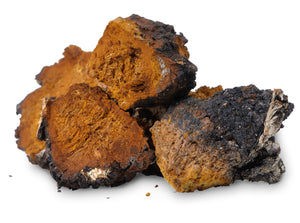 Full Spectrum Chaga Mushroom (Dual Extraction) Extract Powder - Wild Harvested - Na'vi Organics Ltd