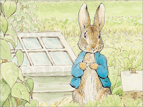 Official Peter Rabbit Collection by Joules